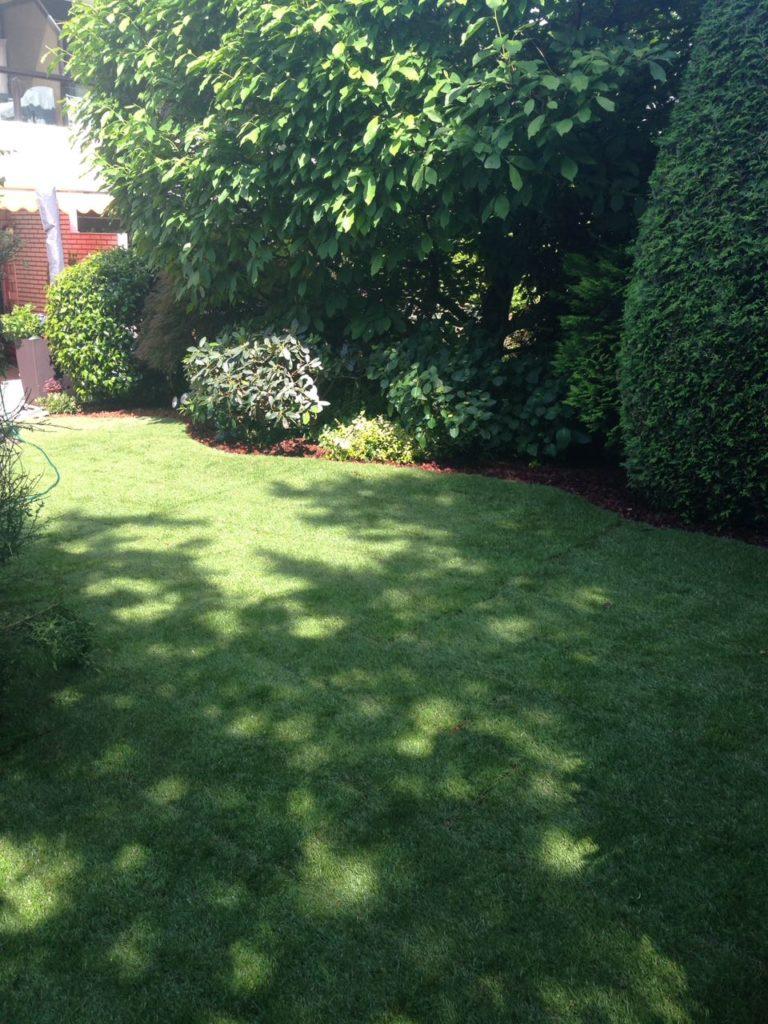 Grüne Wiese im Garten hinterm Haus